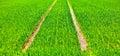 Tire tracks in a green field