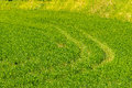 Tire tracks on the green grass