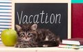 Tired kitten with school accessories waits for vacation Royalty Free Stock Image