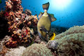 Titan triggerfish, ocean and sun Stock Photos