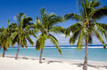 Titikaveka beach in rarotonga cook islands line of coconut palm trees at during sunset Stock Photos