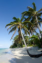 Titikaveka beach in rarotonga cook islands line of coconut palm trees at during sunset Stock Images