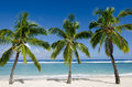 Titikaveka beach in rarotonga cook islands line of three coconut palm trees at during sunset Stock Photography