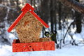 Tits feeding in winter great sitting feeder Royalty Free Stock Photos