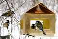 Tits feeding in winter hungry eating seeds from feeder Royalty Free Stock Photos