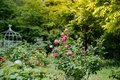 Tned image of beautiful red roses growing at the road in park. Royalty Free Stock Photo