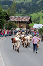 To bring the cattle down in autumn they start from mountain pastures cows with bells on street in wagrain at this day Stock Image