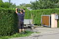 To clip a hedge gardening worker is cutting privet Royalty Free Stock Image