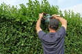 To clip a hedge gardening worker is cutting privet Royalty Free Stock Images