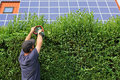 To clip a hedge gardening worker is cutting privet Stock Photo