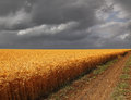 To a thunder storm road along edge of wheaten field on the sky background Royalty Free Stock Photography