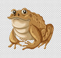 Toad with brown skin Royalty Free Stock Photo