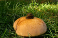 Toad on toadstool caught this sitting top of a Stock Image