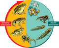 Toad vector illustration of frog life cycle Stock Images