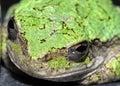 Toad wild Στοκ φωτογραφίες με δικαίωμα ελεύθερης χρήσης