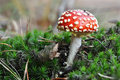 Toadstool Photographie stock