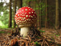 Toadstool baby Royalty Free Stock Photos