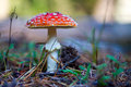 Toadstool closeup of a in a grass Stock Images