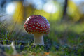 Toadstool detail view on the little growing in the forest Royalty Free Stock Image