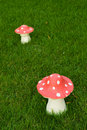 Toadstool on a green lane Stock Photography