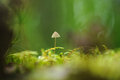 Toadstool poisonous on the moss in forest close up Stock Photos
