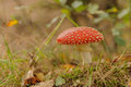 Toadstool signs of autumn in the netherlands on the forrest floor Royalty Free Stock Photography
