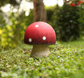 Toadstool a standing on the meadow Stock Image