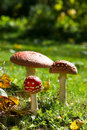 Toadstools colorful in a meadow Royalty Free Stock Photos