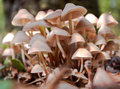 Toadstools in the forest Royalty Free Stock Photo