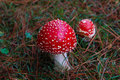 Toadstools in the forest mount crawford south australia Stock Image