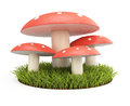 Toadstools on lawn on white background d rendering image Royalty Free Stock Image