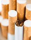Tobacco in cigarettes with a brown filter close up Royalty Free Stock Photos