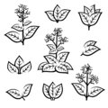 Tobacco leaf icons set. Collection icon tobacco. Vector Royalty Free Stock Photo
