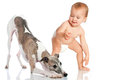 Toddler with dog naked whippet Royalty Free Stock Photography