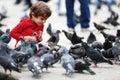 Toddler Feeding The Pigeons