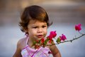 Toddler girl admiring flowers baby wearing pink looking at beautiful bougainvillea Stock Image