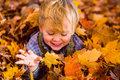 Toddler plays in the leaves two year old blonde fall autumn maine Stock Photos