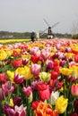 Toerist in Holland Royalty-vrije Stock Afbeeldingen