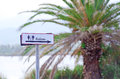 Toilet sign with palm tree on backdrop Stock Photography