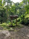 Toilette sign stand wood bamboo jungle rain forest middle place tree sky through sun shine earth leafes chiang mai north Royalty Free Stock Photo