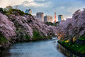 Tokyo city view with sakura blown down in Stock Photo