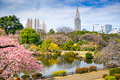 Tokyo in Spring Royalty Free Stock Photo