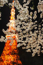 Tokyo Tower With Cherry Blossoms