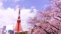 Tokyo tower with sakura foreground in spring time at Tokyo Royalty Free Stock Photo