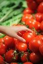 Tomater på marknaden Arkivbild