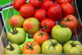 Tomates Photo stock