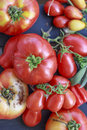 Tomato all shapes and sizes Royalty Free Stock Photo