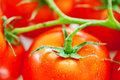 Tomato background Royalty Free Stock Images