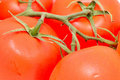 Tomato background Royalty Free Stock Image