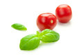 TOMATO & BASIL Stock Photography